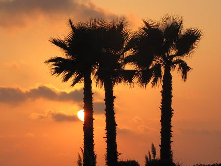 alexandria egypt: Palm trees on San Stefano beach, Alexandria, Egypt