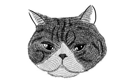 猫の顔イラスト 写真素材