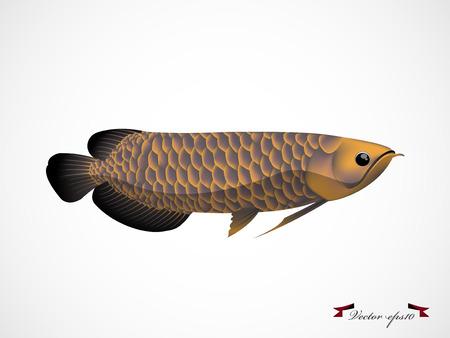 arowana fish vector Illustration