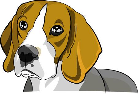 beagle: beagle dog vector