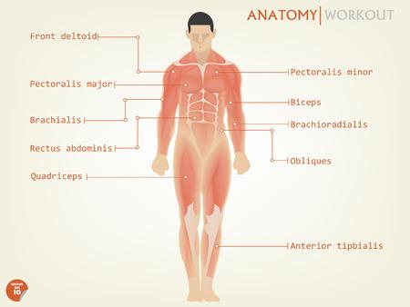 人間の解剖学の説明とフロント サイドの美しいデザイン