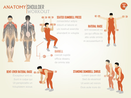 shrug: beautiful design info graphic of shoulder workout consist of seated dumbbell press,rateral raise,bent-over rateral raise and standing dumbbell shrug
