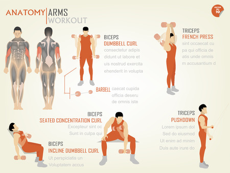 beautiful design info graphic of arm workoutbiceps and triceps consist of biceps dumbbell curl,biceps seated concentration curl,biceps incline dumbbell curl,triceps french press and triceps pushdown