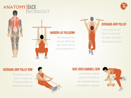 muscular men: beautiful design info graphic of abdominal back workout consist of narrow-lat pull down,overhead grip pull up,overhead grip pulley row,bent-over dumbbell row