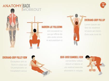 hombre deportista: hermosa info diseño gráfico de entrenamiento volver abdominal consiste en estrecha-lat tira hacia abajo, agarre sobrecarga tire hacia arriba, fila polea agarre arriba, encorvada fila mancuerna
