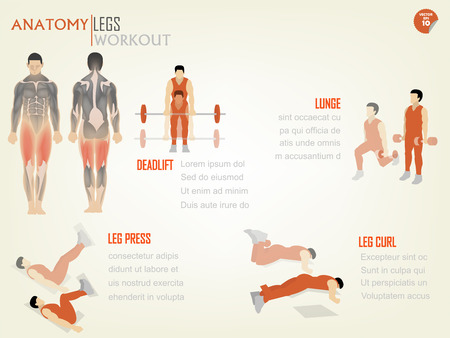 fit body: beautiful design info graphic of abdominal legs workout consist of deadlift,lunge,leg press and leg curl