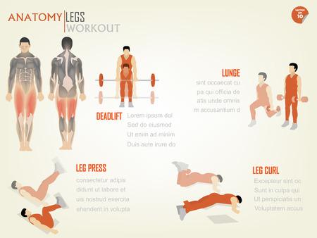 piernas hombre: hermosa info diseño gráfico de entrenamiento de las piernas abdominal consiste en peso muerto, estocada, prensa de piernas y flexiones de rodilla