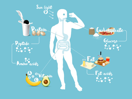 absorption: Beautiful info graphic design concept vector of digestive system and absorption system of human