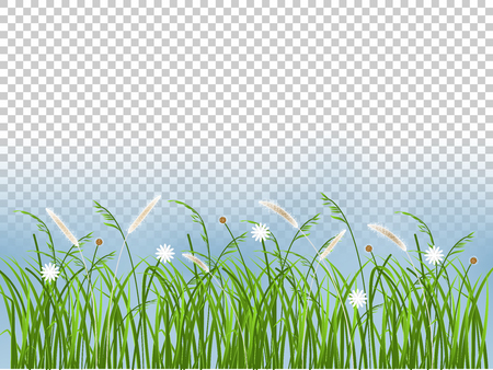Beautiful spring grass flower  graphic design background