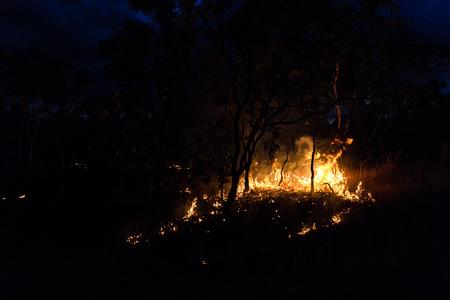 australian bushfire at Night next to a tree