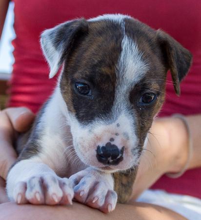 Lindo perrito sentado en la pierna de las niñas, Broome Australia