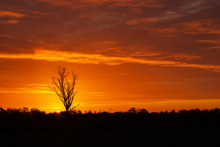once in a life time sunset in Australia with sillhouettes of trees, Cobram, Victoria
