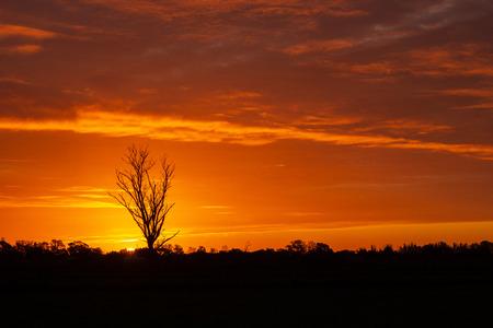 once in a lifetime zonsondergang in Australië met sillhouettes van bomen, Cobram, Victoria