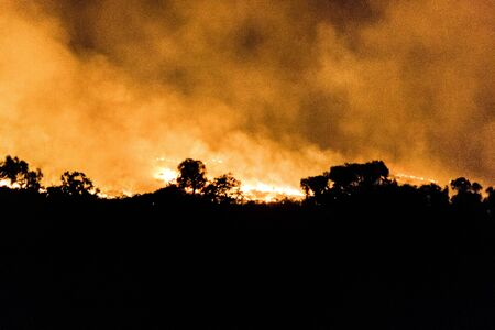 australian bushfire of a forrest at Night, nothern territory