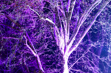 outdoor lighting: View of single tree at night with purple low angle lighting during an outdoor event
