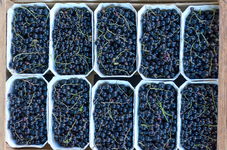 Blackcurrant for selling on the fruit market