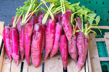 Wild Radish for selling on the vegetable market 版權商用圖片
