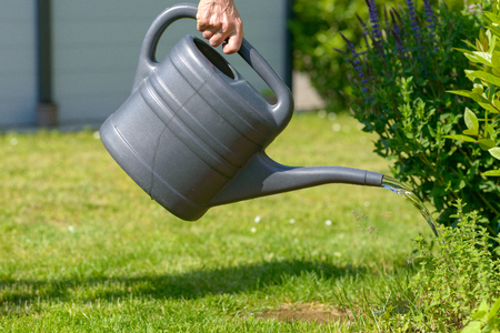 Woman watering her garden with a watering can pouring water onto plants at the edge of a law near a house in a close up view