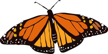君主、蝶、飛行、飛行、野生動物、黒、黄色、オレンジ、スポット、昆虫、カットアウト、スクラップ ブック、背景、小さい、珍しい、鱗翅目、カ