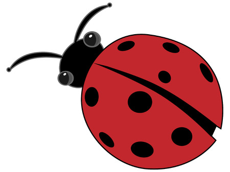 Ladybug Isolated Vector