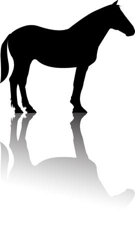 horse saddle: Cavallo permanente siluetta riflessione