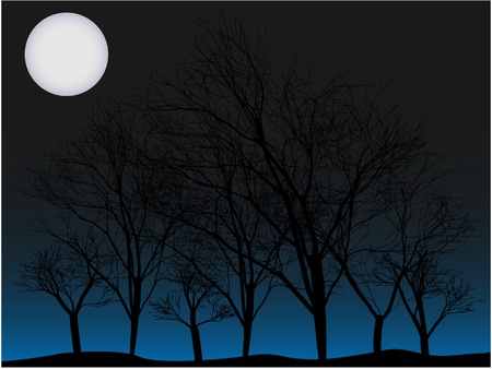 old moon: Several creepy baron forest of trees without people at night lit by big moon