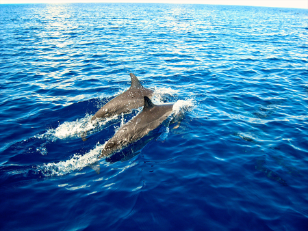 dolphin in zanzibar Stock Photo