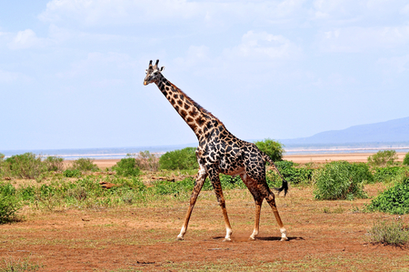 Lake Manyara National Park photo