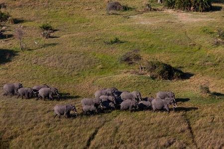 tusk: elephant, tusk and herd