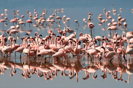 crater lake: flamingo in Tanzania national park Stock Photo