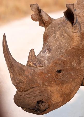 poaching: african black rhino