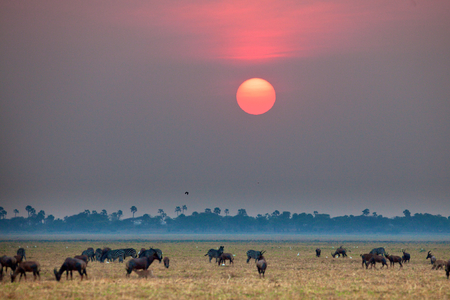 wildbeest migration photo