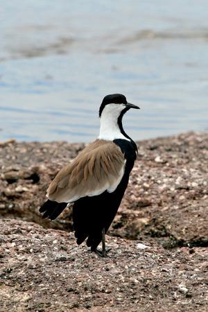 ngamba: birds of Tanzania Stock Photo