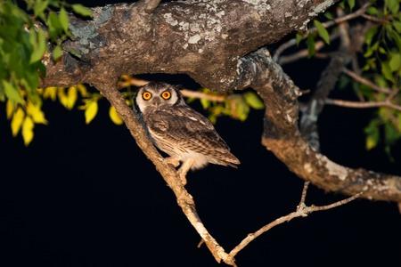 birds of tanzania photo