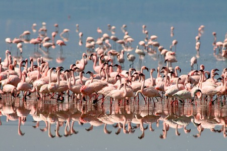 birds of tanzania photo