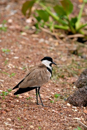 ngamba: birds of tanzania
