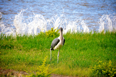 mwanza: birds of tanzania