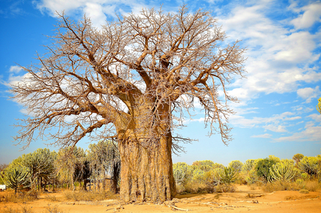 arid climate: landscape