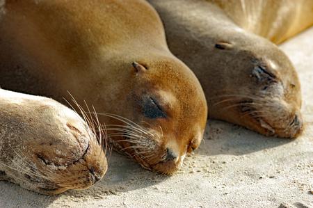galapagos: Sea lions up-close on Galapagos beach