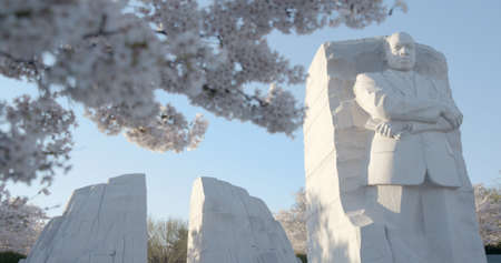 Martin Luther King Memorial in Washington DC During Cherry Blossom Season
