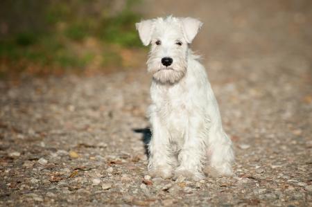 12-week-old puppy sitting on a path