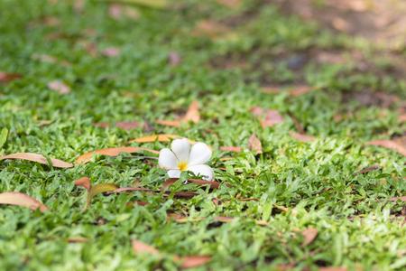 vegetative: White flowers Stock Photo