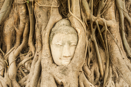 head of the sandstone buddha at ayuthaya in Thauland Stock Photo