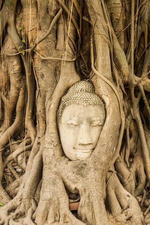 Head of sandstone buddha in tree root at Ayuthaya Thailand Stock Photo