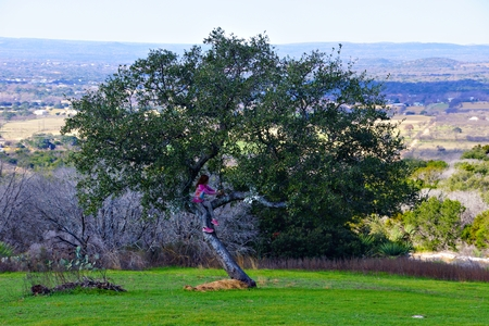 Girl overlooking hill country from a tree