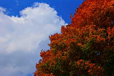Blue sky with autumn leaves