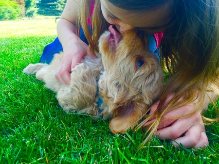 Girl getting licked by puppy in the lawn