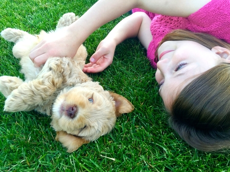 Girl playing with puppy in the lawn Banco de Imagens