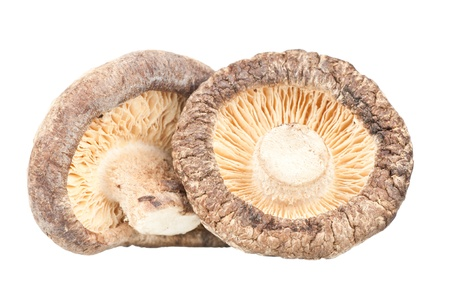 Dried mushrooms over a white background