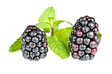 Blackberries over a white background Stock Photo